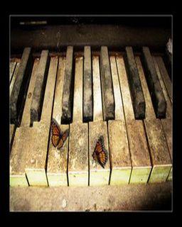Les papillons oublient qu'ils ont été   chenilles...deschenilles...